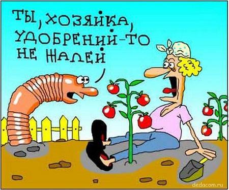анекдот картинка про сад и огород
