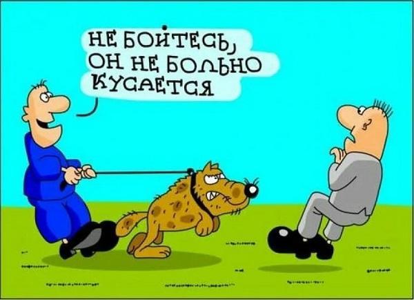 Собачьи анекдоты