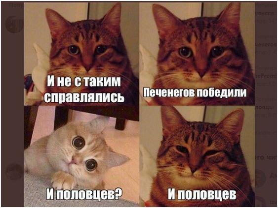 Шутки про котов на картинках