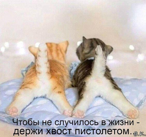 Read more about the article Шутки с котами и кошками на картинках