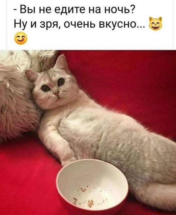 Шутки с котами и кошками на картинках
