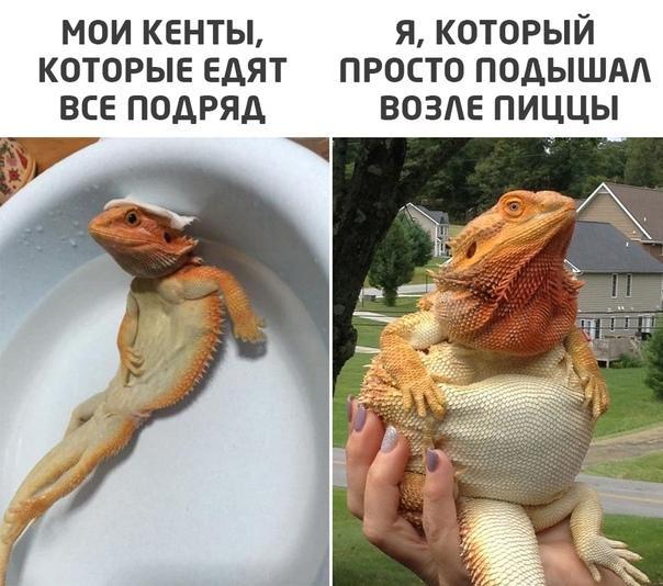 Read more about the article Смешные свежие мемы 19.05.2021