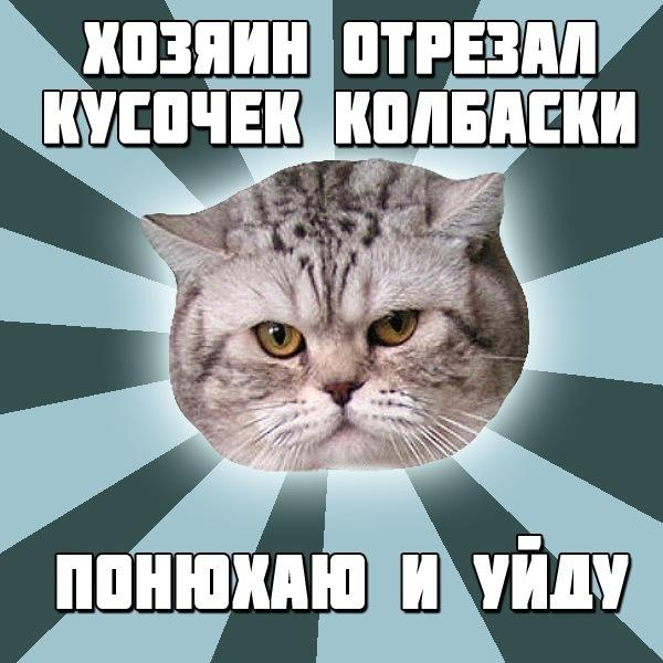 Read more about the article Мемы про котов
