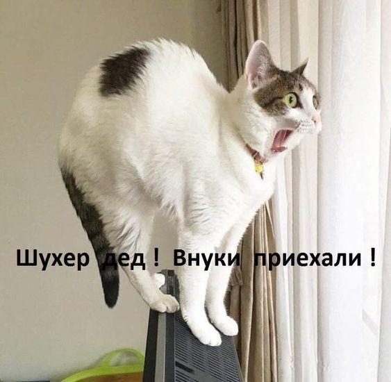Read more about the article Мемы с котами
