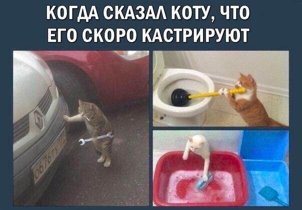 Мемы про котов