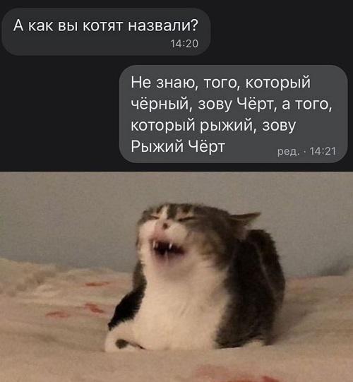 Смешные до слез мемы
