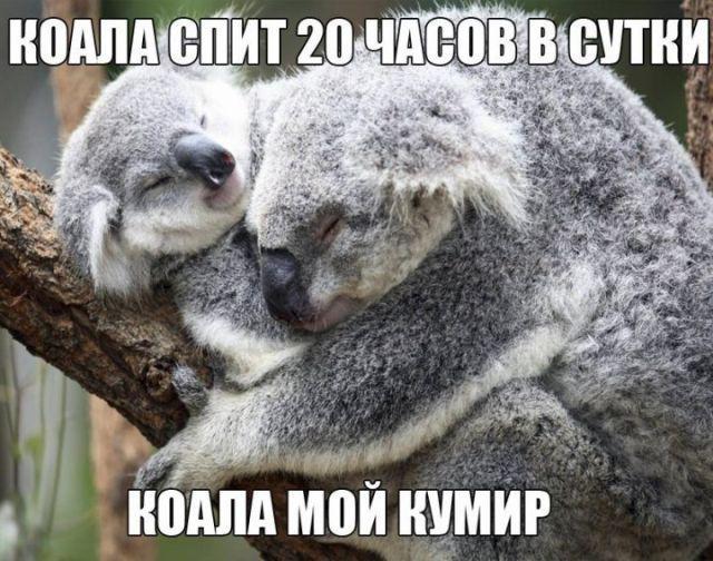 Read more about the article Смешные свежие мемы 14.07.2021