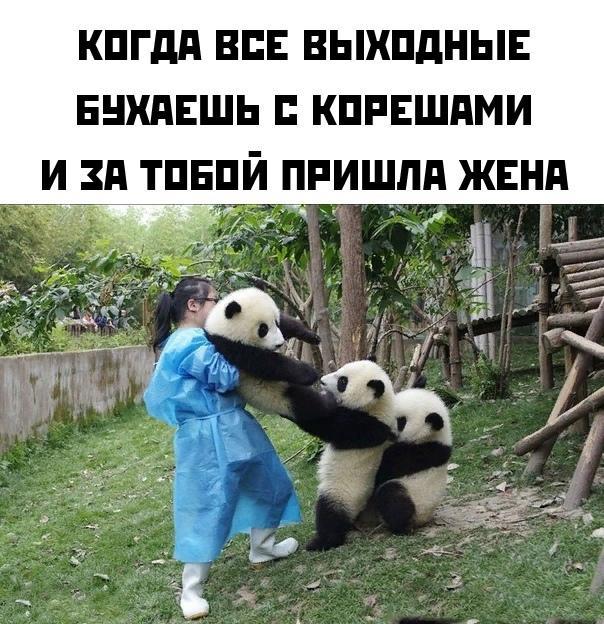 Read more about the article Свежие смешные мемы понедельника