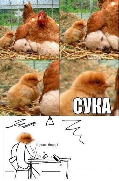 Очень смешные картинки с надписями четверга