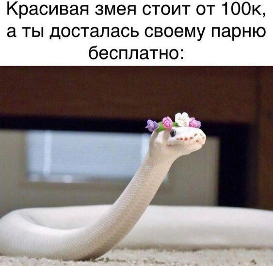 Read more about the article Прикольные картинки с надписями вторника