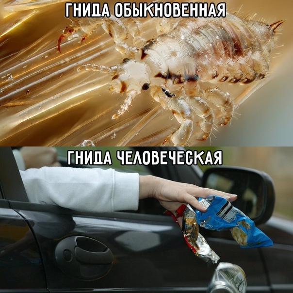 Свежие самые смешные мемы субботы