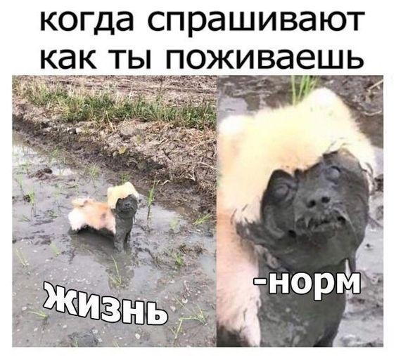 Read more about the article Свежие самые смешные мемы понедельника