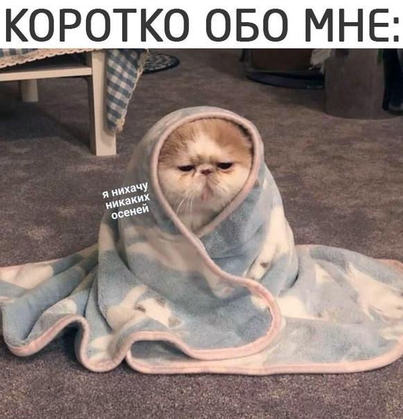 Read more about the article Свежие прикольные мемы понедельника