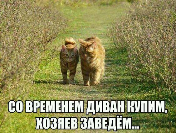 Read more about the article Ржачные до слез картинки с надписями вторника