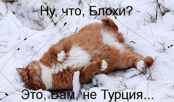 смешно про кошек