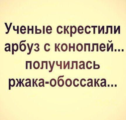 Read more about the article Свежие прикольные до слез шутки пятницы