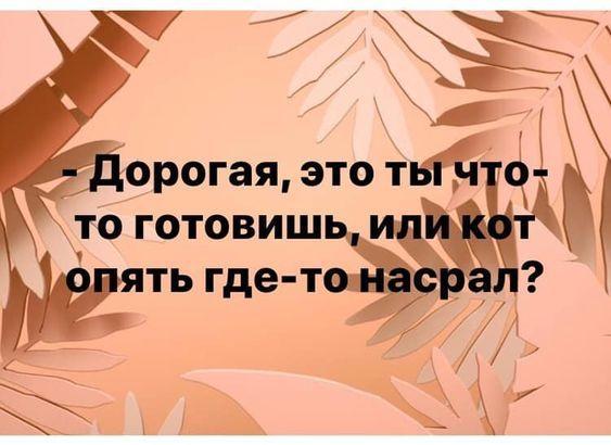 Read more about the article Свежие прикольные до слез шутки субботы